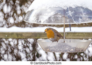 europeu, inverno, birdfeeder, robin