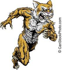 executando, esportes, wildcat, mascote