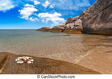 exoticas, seashells, praia
