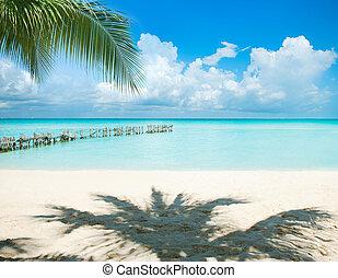 férias cararibe, sol, concept., palmas, island., turismo