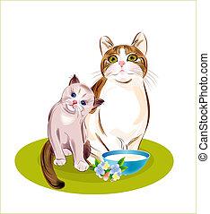 family., gato, eat., ir, gatinho, gatos