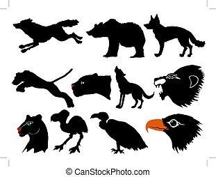 fauna, predadores