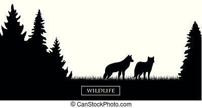 fauna, silueta, prado, dois, floresta preta, lobos brancos