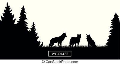 fauna, silueta, prado, wolfs, floresta preta, branca, pacote