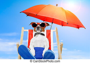 feriado verão, cão, férias