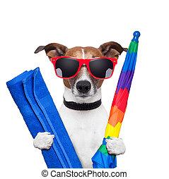 feriados, cão, verão