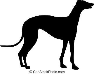 ficar, greyhound, silueta, cão