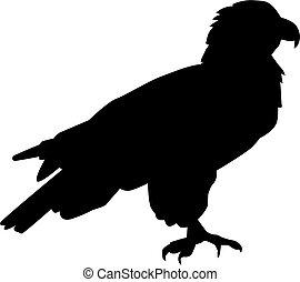 ficar, silhueta águia