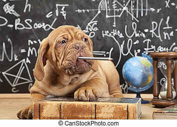 filhote cachorro, chewing lápis