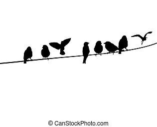 fio, telefone, pássaros