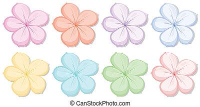 five-petal, diferente, flores, oito, cores