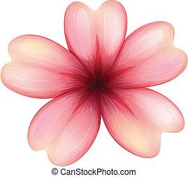 five-petal, flor, florescer