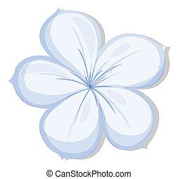 five-petal, flor