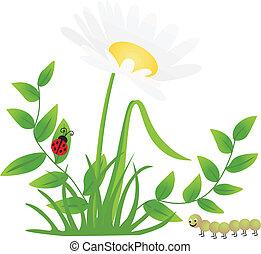 flor, centipede, ladybug