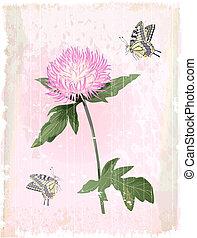flor cor-de-rosa, aster