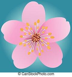 flor, cor-de-rosa, cinco, pétalas