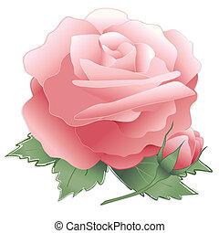 flor, cor-de-rosa levantou-se