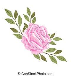 flor cor-de-rosa, primavera, rosa