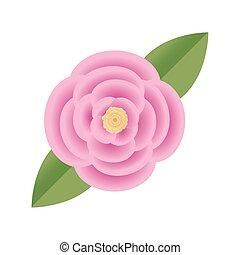 flor, rosa, cor-de-rosa