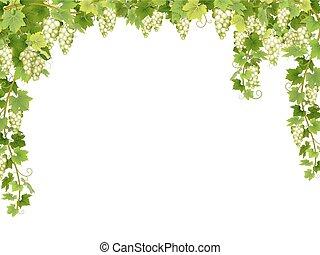 floral, uva branca, quadro