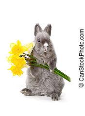 flores, coelhinho, amarela