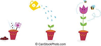 flores, crescimento, fases, -, tulipa, jardim