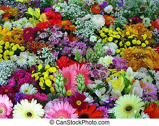 flores, exibição