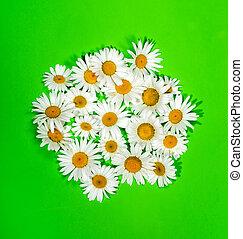flores, experiência verde, camomiles
