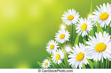 flores, fundo, margarida