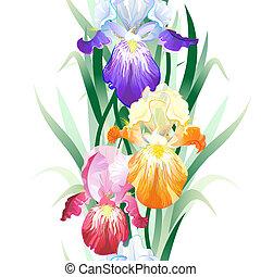 flores, fundo, seamless, vetorial, íris