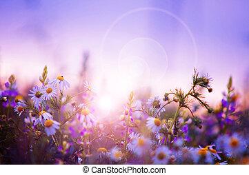 flores mola, campo