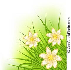 flores, primavera, capim, experiência verde
