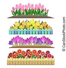 flores, primavera, jardim, isolado