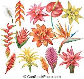 flores tropicais, jogo