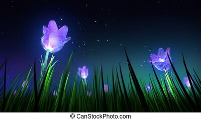 flores, volta, noturna