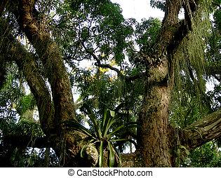 floresta amazônica, amazônico, árvore