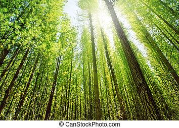floresta, luz solar