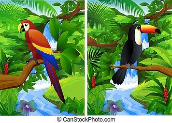 floresta, tropicais, fundo