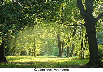floresta, verão, árvores