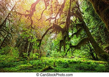 floresta, verde