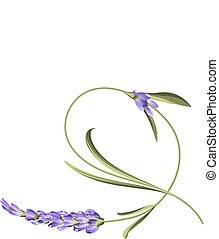 flower., único, curva
