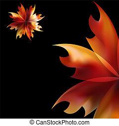 fogo, rosa, flamejante, pétala flor