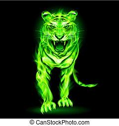 fogo, verde, tiger.