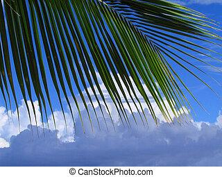 folha, árvore palma, cloudscape