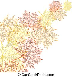 folha, bacground, macro, outono, vetorial, maple.
