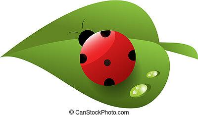 folha, orvalho, ladybird, verde vermelho, manchado