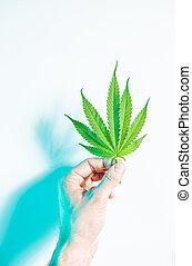 folha, topo, macho, verde, mão, luz, vista, néon, marijuana, cânhamo, ou, segurando, estúdio