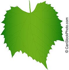 folha, uva, verde