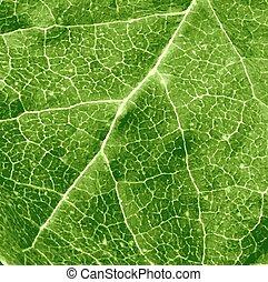 folha, verde