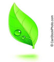 folha verde, lustroso